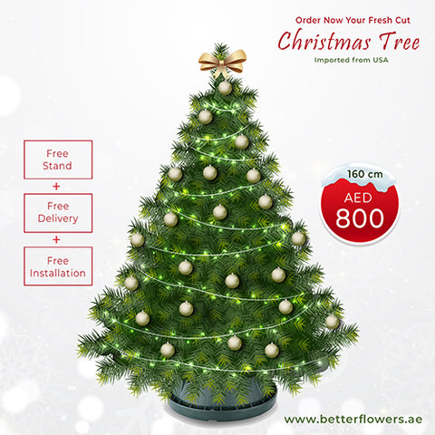 160 cm Real Fresh Cut Christmas Tree