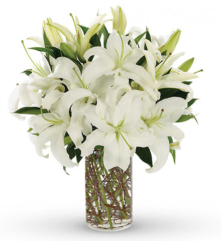 Magic of White Lily