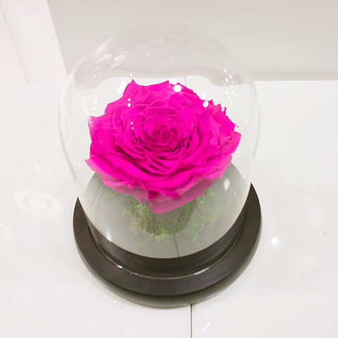 Infinity Pink Rose