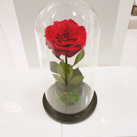Infinity Red Rose