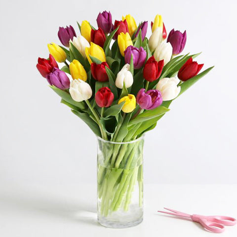 Mixed Color Tulips