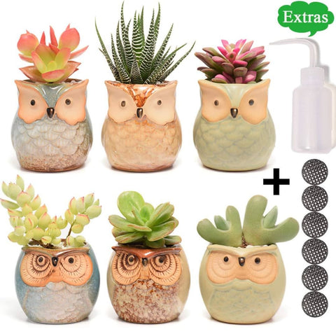 Image of Succulent Planter - Owl