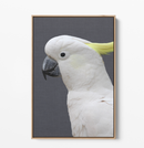 Cockatoo Stand Off - Two Piece Stretched Canvas Framed Wall Art