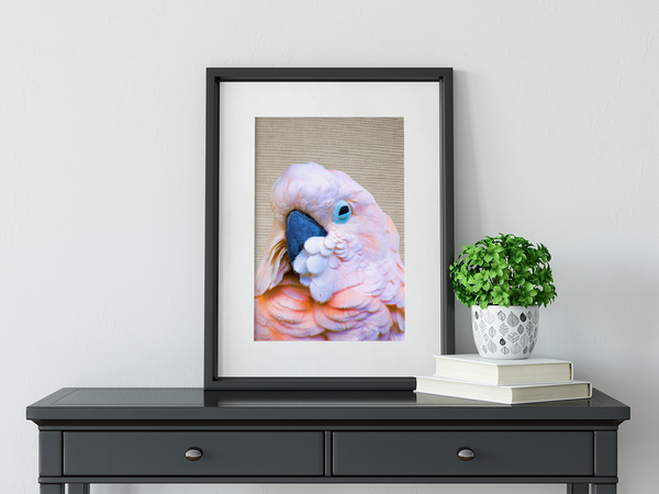 Flamin' Galah - Framed Art Print Wall Art