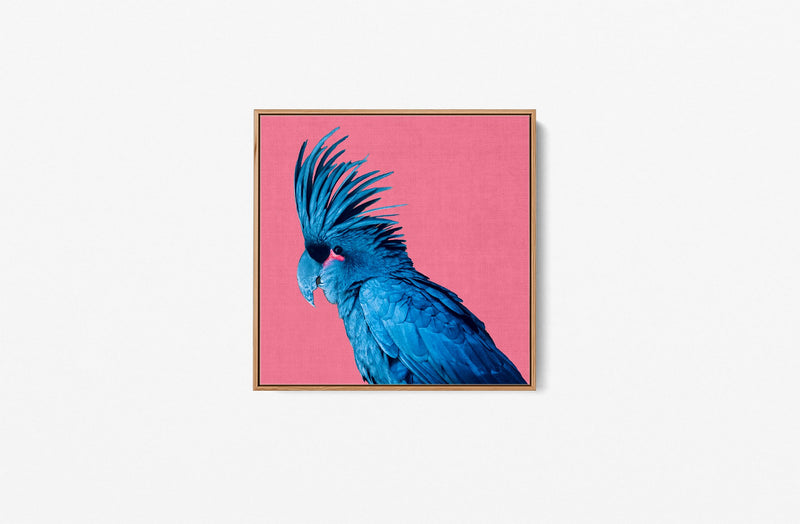 Polly - Black Parrot Pink Background Canvas Wall Art Print