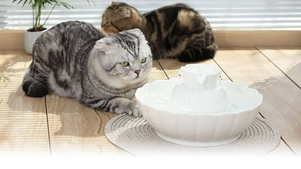 Best Cat Water Fountain Reviews 2020