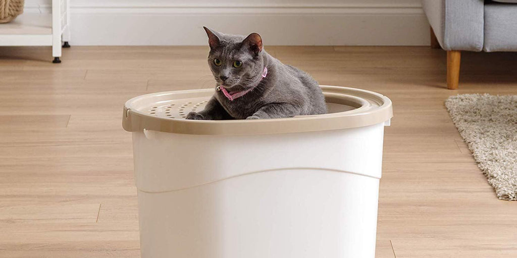 Best Top Entry Cat Litter Boxes 2020