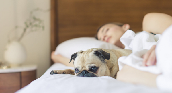 Top 10 Pet-Friendly Hotels I Experienced