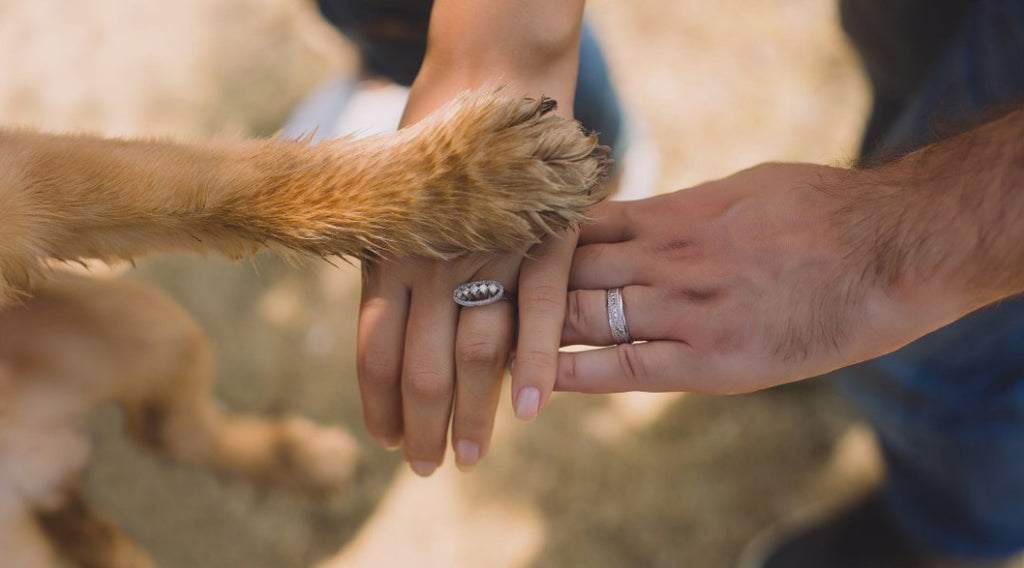 8 Pro Tips to Care For Your Dog's Paw