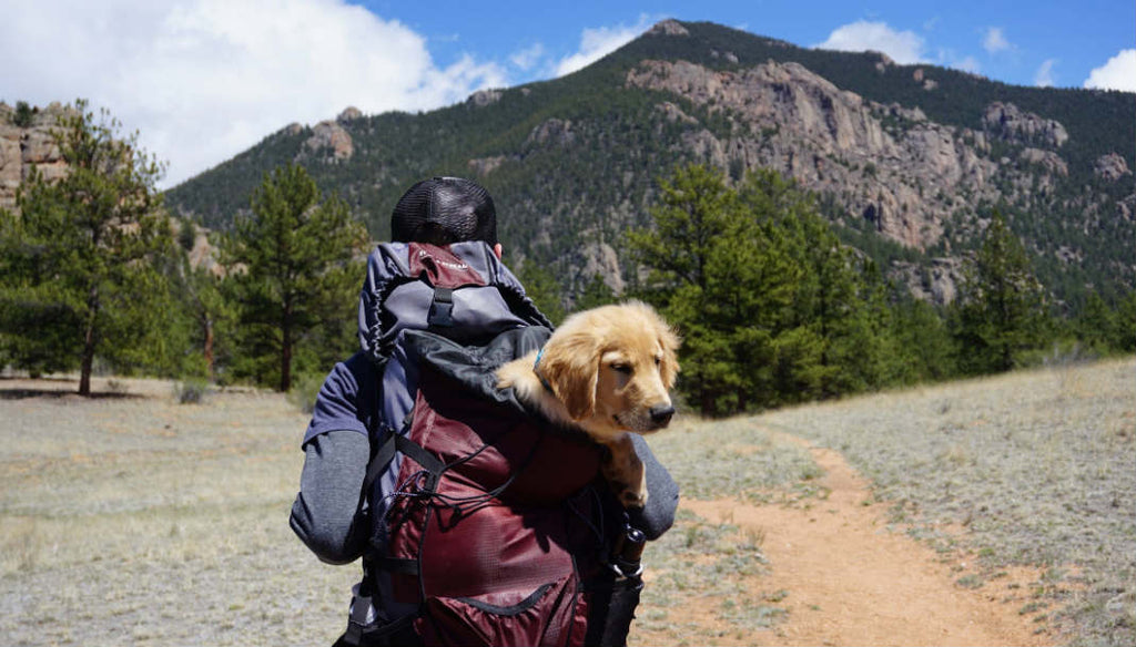 Traveling with Your Dog, The Complete Guide (2019 Edited)