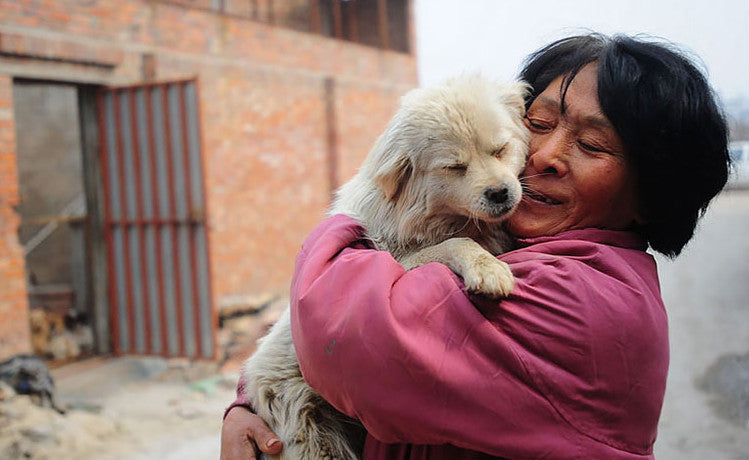 Yulin Dog Festival in 2019: A Chinese Tell You Why They Eat Dog