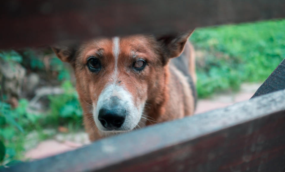 How Long Can a Dog Go Without Food or Water? (11 Different