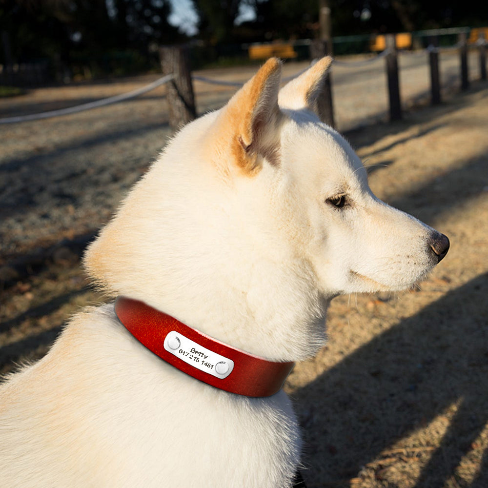 Personalized Real Leather Dog Collar for Dog Adjustable