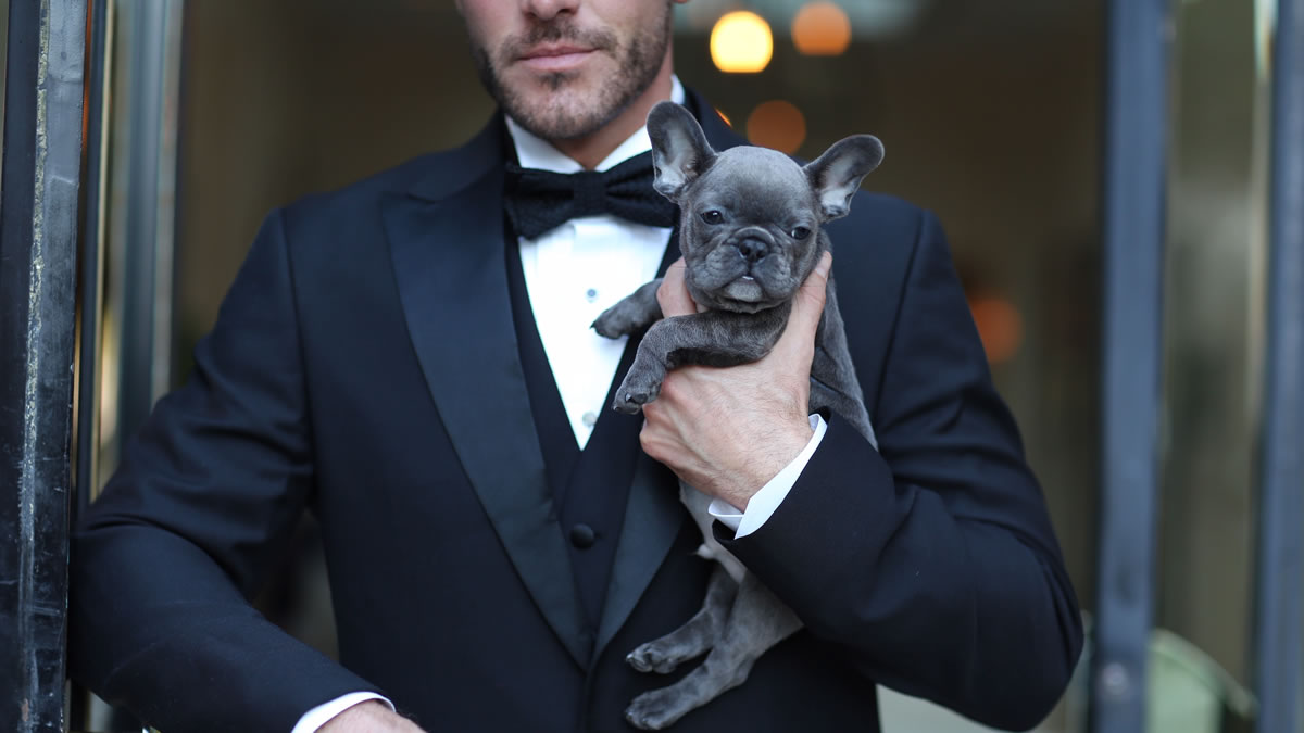 a blue frenchie puppy with a man