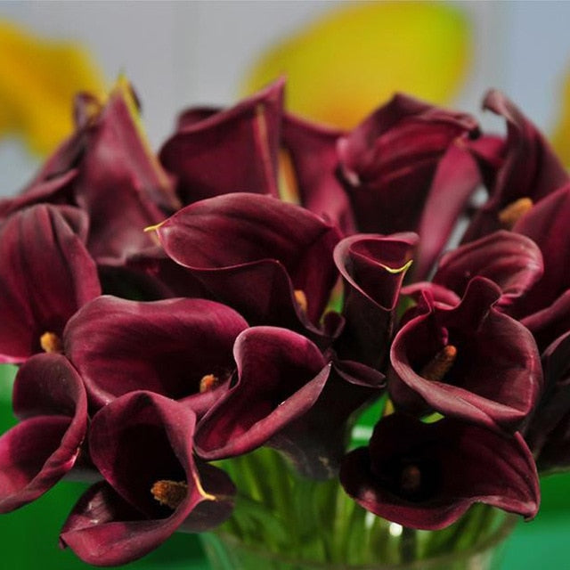 2 pieces true calla lily bulbs - aidaroos.com