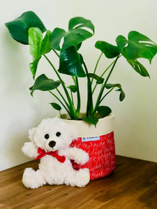 Love Package with Monstera and Teddy