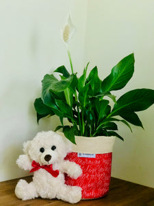 Love Package with Peace Lily and Teddy