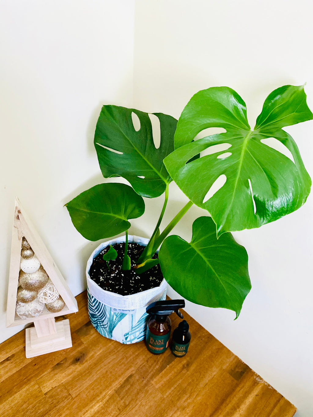 Monstera Deliciosa Bundle with Neem Oil and Plant Food