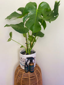 Monstera Bundle with Neem Oil, Plant Food