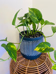 Devil's Ivy with Black Striped Pot
