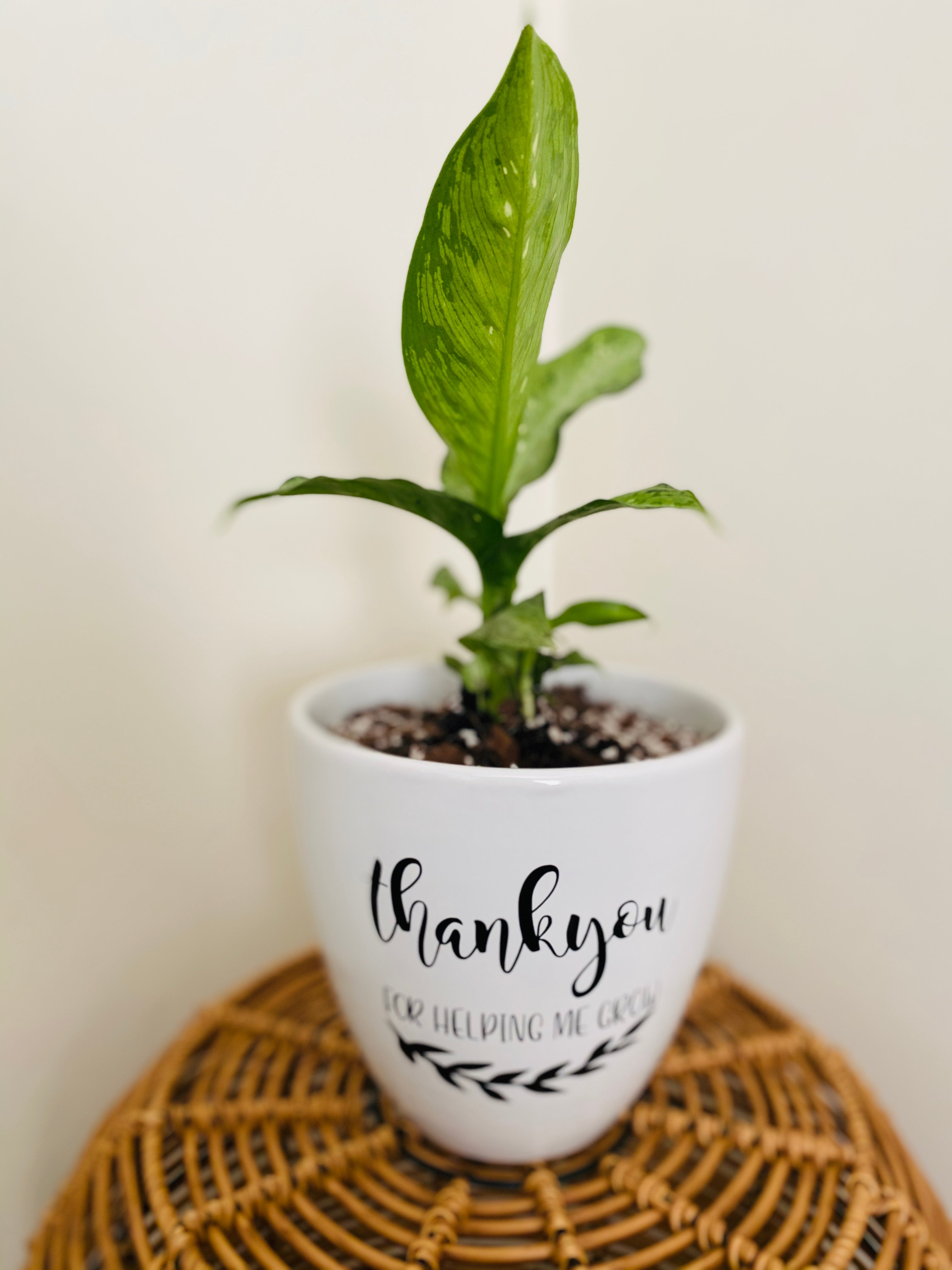 Customised Pot and Plant