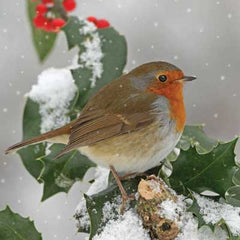 Robin, Holly and Snow