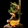 Bonsai Juniperus Chinensis Sargentii 28.1627 with Tanuki - kebunbibit