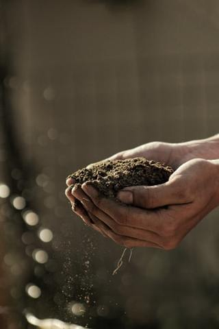 a handful of soil with a hemp plant replenishing the nutrients in the soil