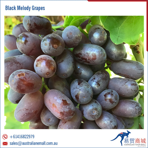 Black Melody Australian Grapes