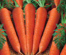 Load image into Gallery viewer, Fresh Vegetables Wholesale Price Fresh Carrot