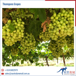 Thompson Australian Table Grapes