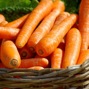 Wholesale sell sell fresh carrot