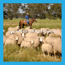 Load image into Gallery viewer, Australian Frozen or Chilled Lamb