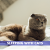 Is it ok to sleep with cats in bed at night?