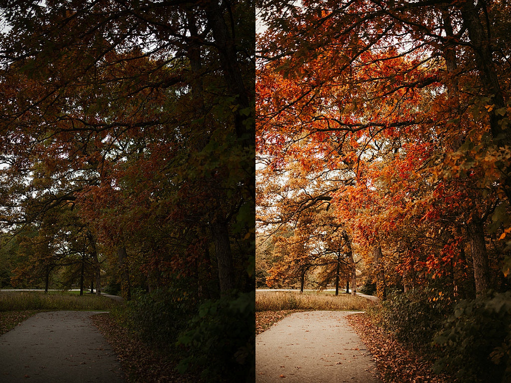 Fall Magic Lightroom