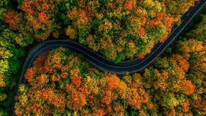 Driving Through an Autumn Forest
