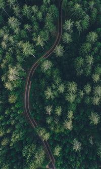 Above a Pine Forest - bshwallsandfloors.com