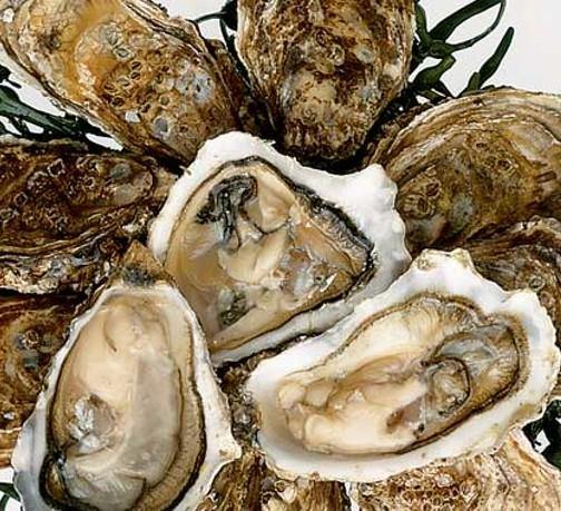 12 Fresh Local Oysters - The Oyster Shed