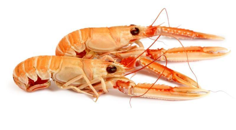 Cooked Hebridean langoustines - 1kg - The Oyster Shed
