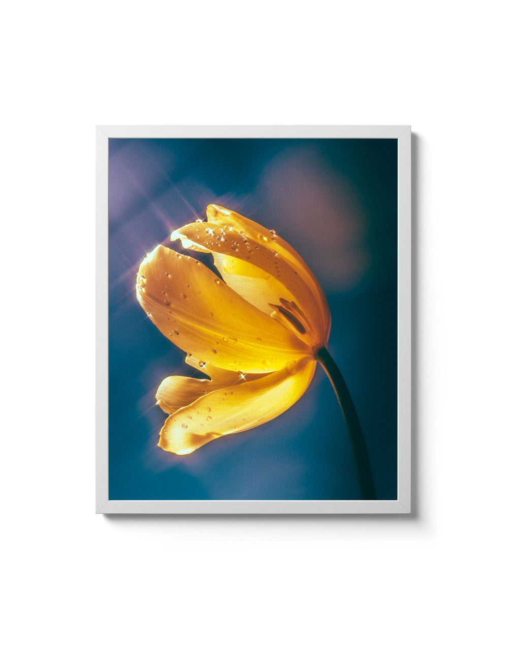 Yellow Tulip (Charity print)