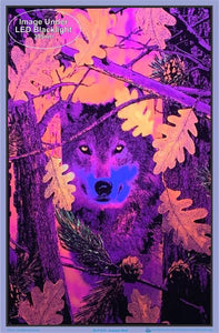 Posters Autumn Wolf - Black Light Poster 007512