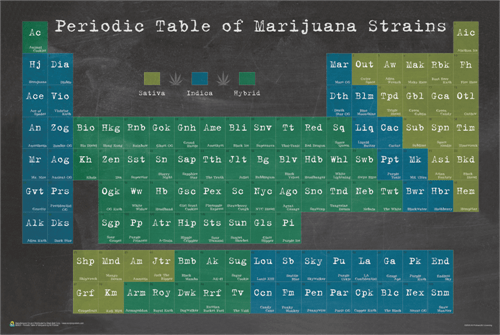 Posters Periodic Table of Marijuana - Poster 100322