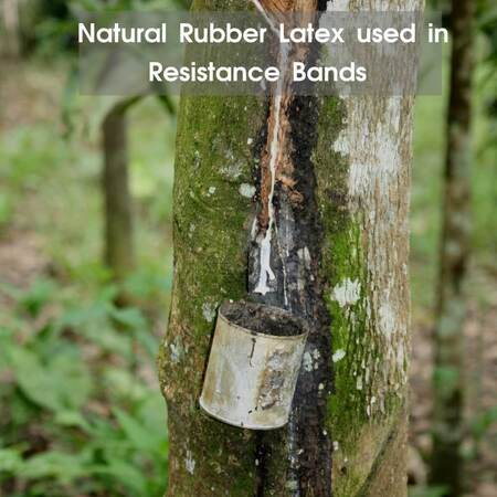 Natural rubber syrup being extracted from rubber tree