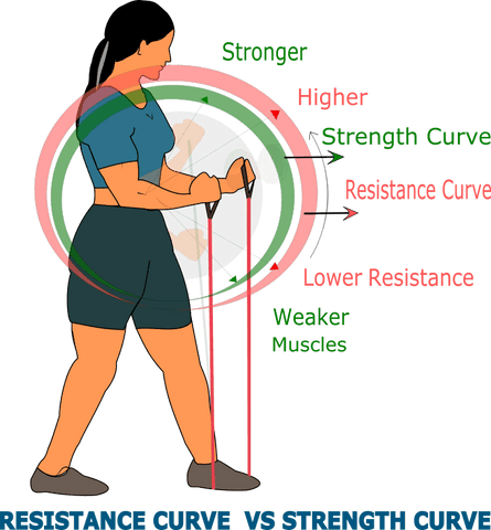 Matching of strength curve of muscles with resistance curve of workout bands in biceps curl exercise by a woman