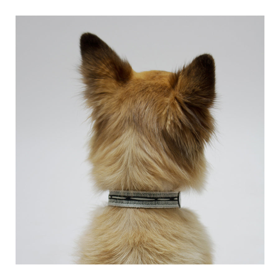 "SEE SCOUT SLEEP Collar 1"" Braveheart - Cream x Black 