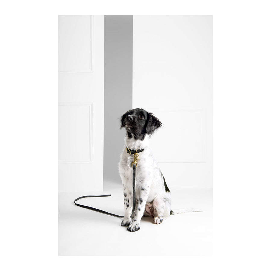 "SEE SCOUT SLEEP Standard Leash 1"" Chef l'Bark - Black x Cream 