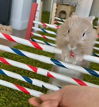 Load image into Gallery viewer, Bunny Hopping Hurdle or Small Dog Agility Jump