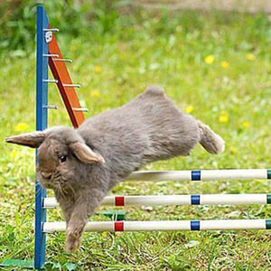 Bunny Hopping Hurdle or Small Dog Agility Jump  Hurdle