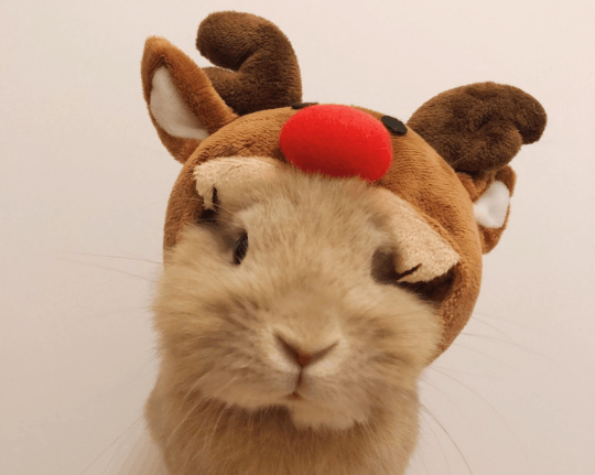 Costume for small pet, reindeer hat, costume hat for pet bunny rabbit, hat for small dog, reindeer hat for pet Pet Headwear Headwear