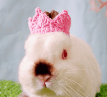 Load image into Gallery viewer, Crown for bunny rabbit , prince crown, pet crown, pet costume, king crown, halloween costume Accesories Headwear